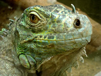 When we operate from our lower lizard brain, we are not much smarter than an iguana.